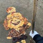 落ち葉を集めて作ったものは?どうぶつの森でおなじみのあのキャラ!