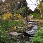 Image for the Tweet beginning: Autumn scenes at Coker Arboretum