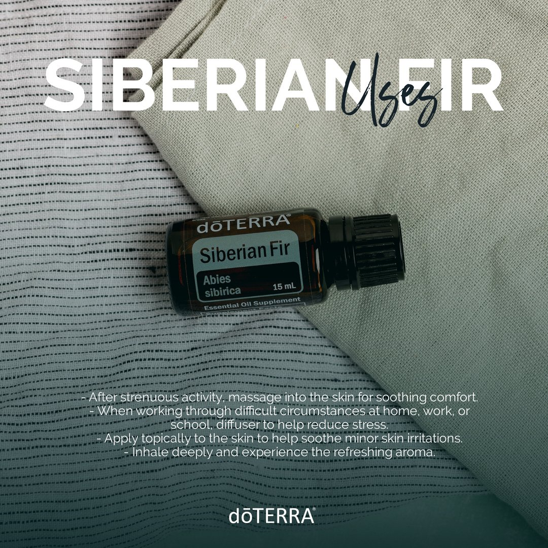 Siberian Fir has a fresh pine aroma and is used to combat daily stress and ease muscle soreness. Whether used topically or diffused, Siberian Fir is a relaxing and grounding essential oil. #EO #essentialoil #Natural #SiberianFir