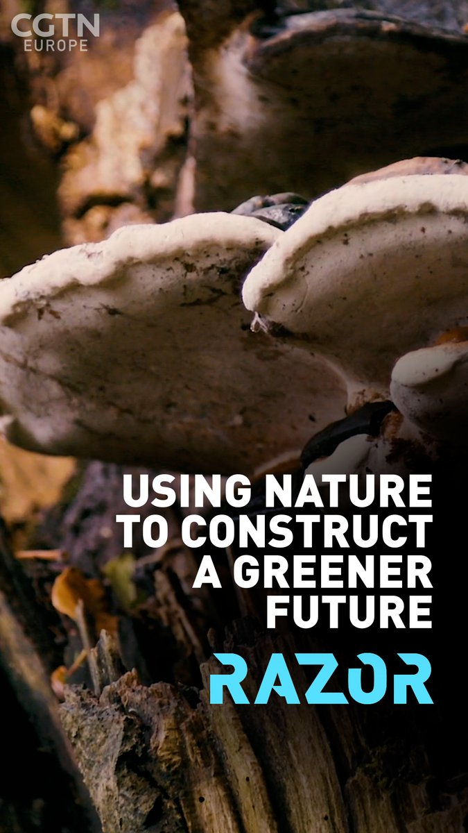 🏢 Shocked by the construction industry's carbon footprint, Ehab Sayed founded a bio-manufacturing company to produce sustainable building material… out of fungus 🍄   Discover #RAZOR Youtube Channel👇   @OnionCollective @biohmhome @EmmaKeelingNZ