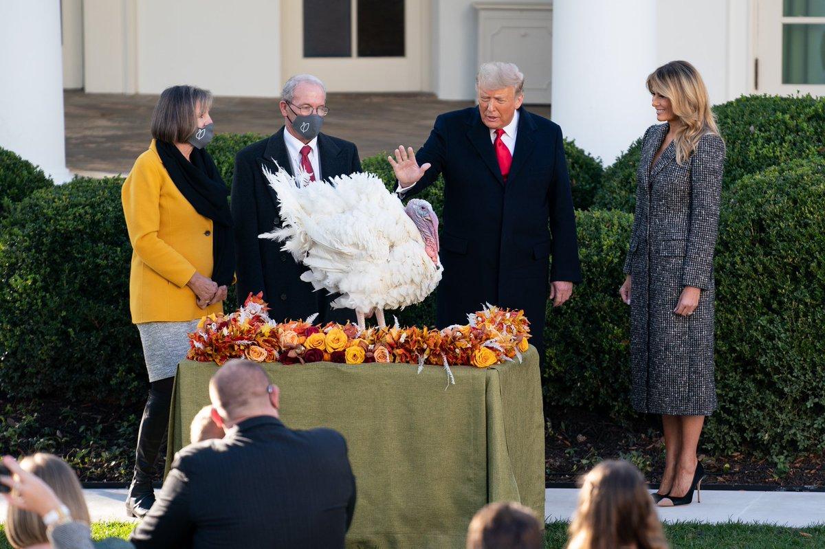 Chaque année, pour Thanksgiving, 2 dindes concourent pour le titre de #NationalThanksgivingTurkey, une tradition vieille de 73 ans. Cette année nous avons accueilli Corn et Cob à la Maison-Blanche et nous sommes ravis d'annoncer que Corn est est notre vainqueur ! 🦃 🌽