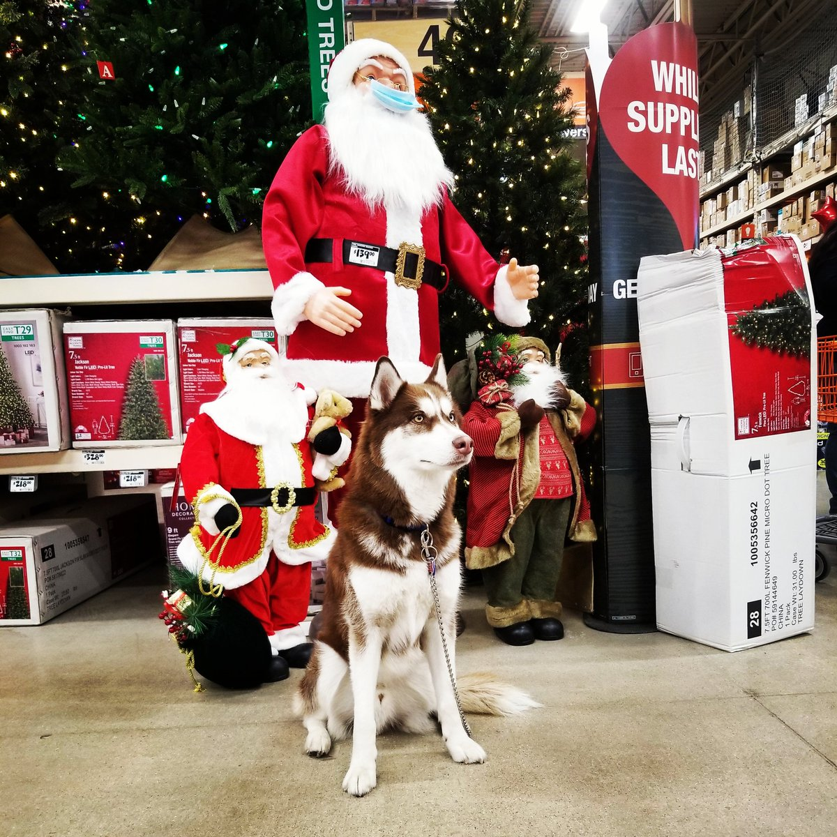 This holiday season...squad...roll out.  #dog #dogs #dogstagram #dogsofinstagram #of #pet #pets #petstagram #petsofinstagram #siberianhusky #siberianhusky_feature #siberianhuskiesofinstagram #siberianhuskylife #husky #huskypics #huskies #huskiesofinstagram #huskynation https://t.co/MvojINWnLX