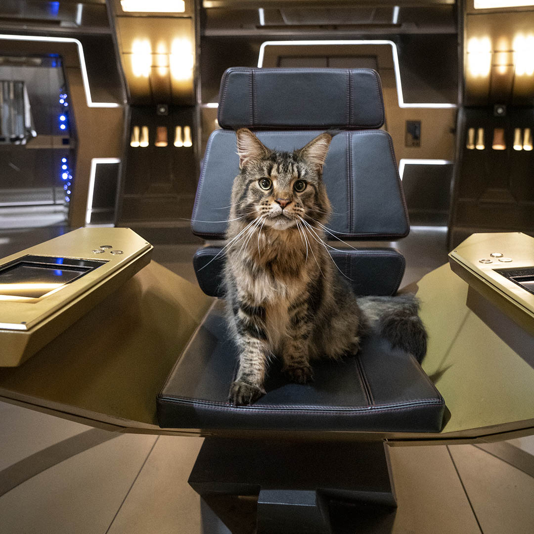New First Officer of USS Discovery? @Grudge_Cat  #StarTrekDiscovery