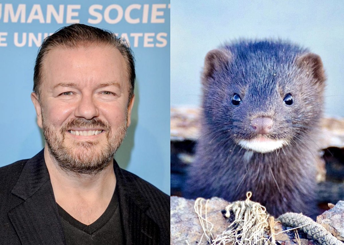 Breaking! @RickyGervais Teams Up With @IDAUSA For #FurFreeFriday; Calls For @Saks & @NeimanMarcus To Stop Selling #Fur! 🙏🦊🚫  #MakeCompassionTheFashion 🦊💕  🚨Take Action & READ MORE: 🌍👉