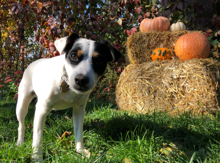 LA Animal Services Serves Up Safety Tips to Keep Your Pets Safe This Thanksgiving Holiday  Read our tips at: