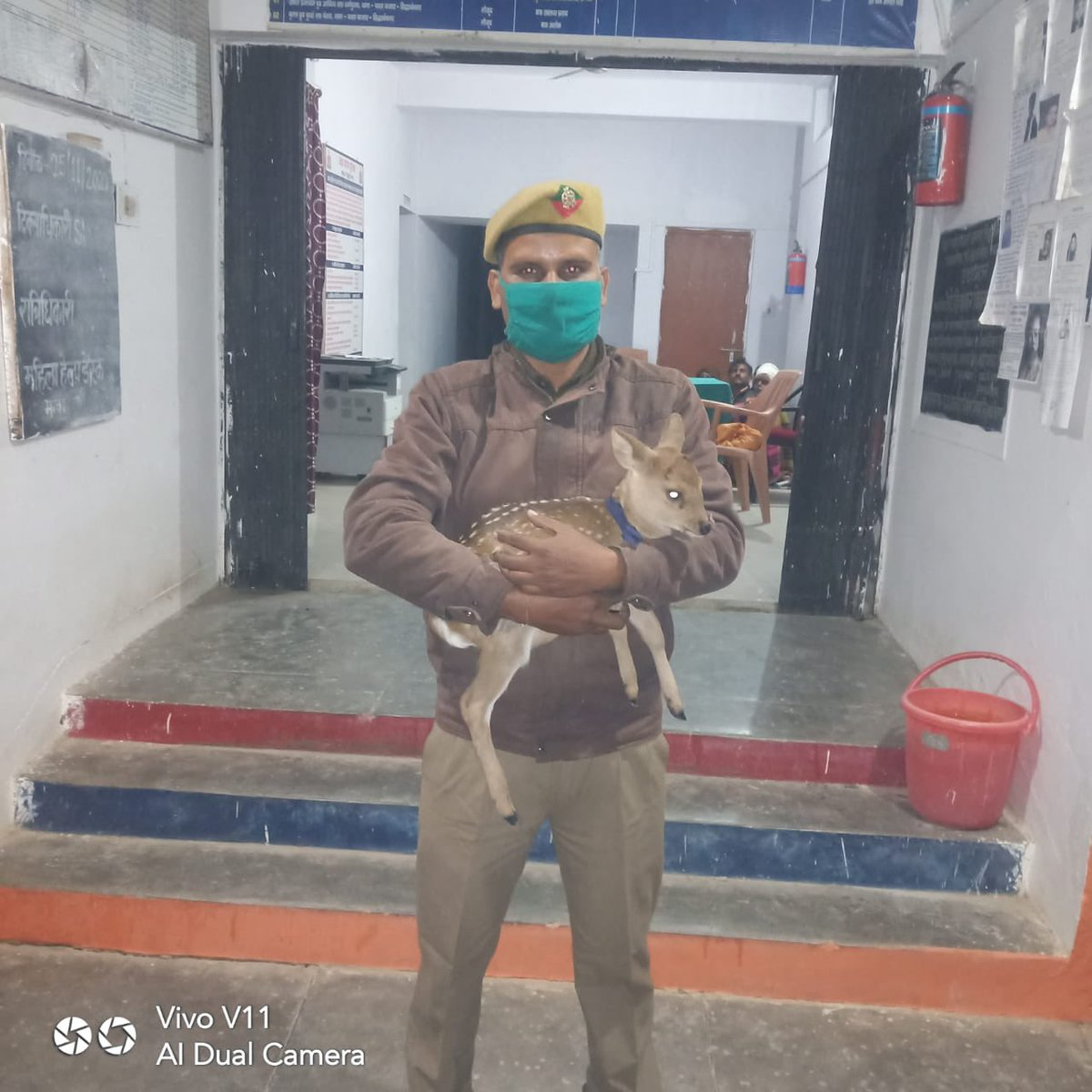 Received a call from PS Pathra @siddharthnagpol late night about an injured fawn. The Forest Staff reached the PS within 20 mins and rescued the animal.  Not all heroes wear a cape, some wear a #Khaki @arunbothra @rameshpandeyifs @ipsvijrk @Saket_Badola