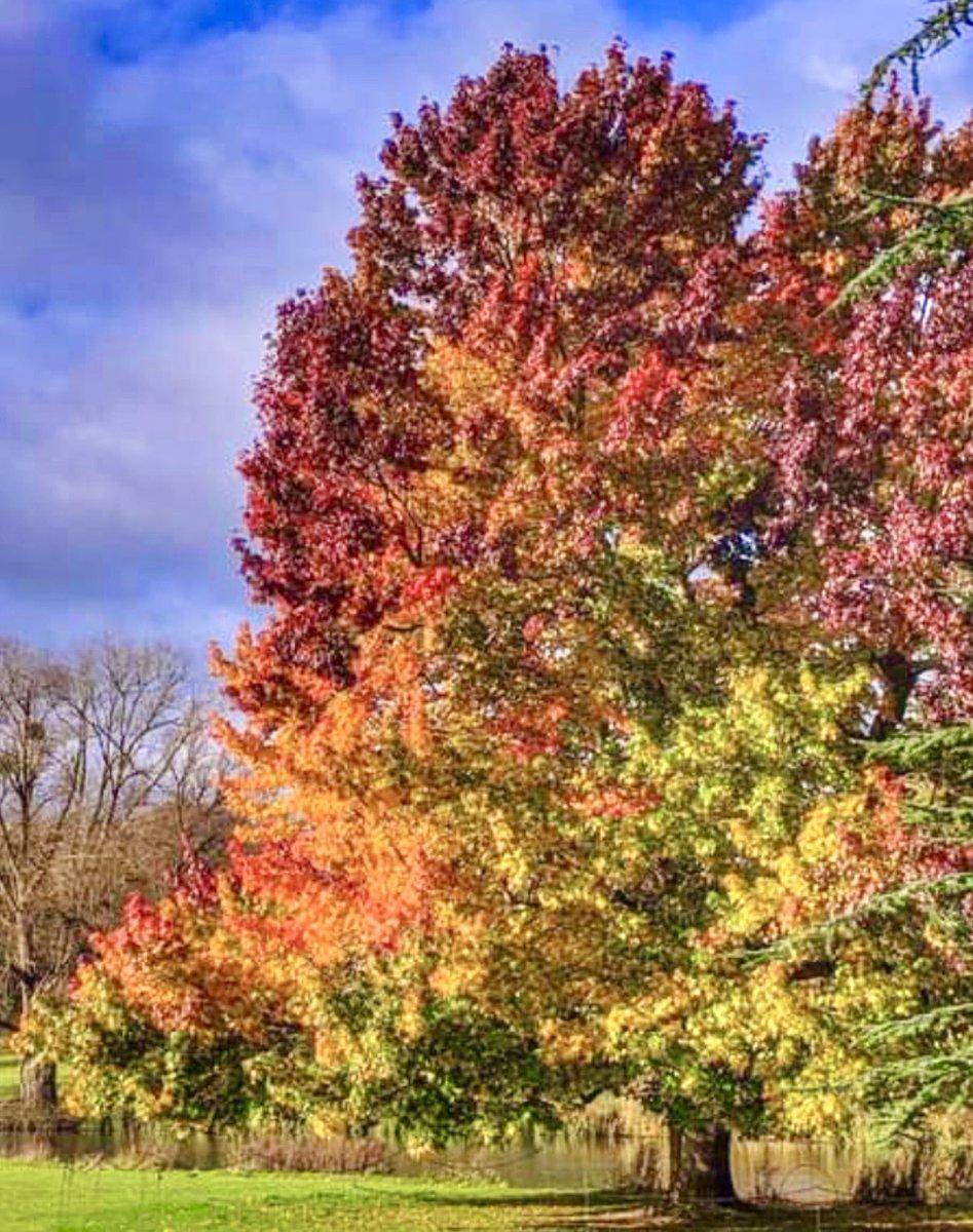 Autumn walk with the most gorgeous colours🍂🧡 * #photooftheday #photograghy #NaturePhotography #naturewalk #Autumn #autumncolours