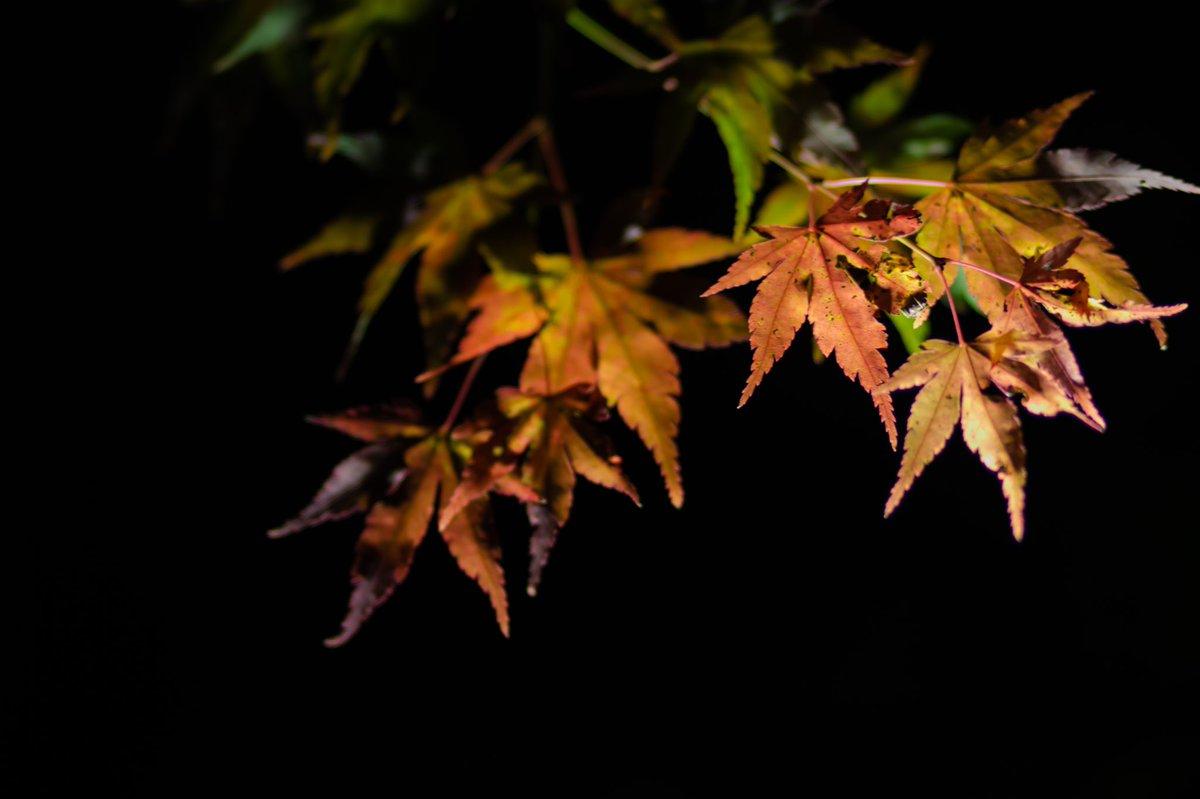 秋。  #紅葉狩り  #秋の風景  #紅葉2020  #NaturePhotography  #PhotoOfTheDay  #写真好きな人と繋がりたい