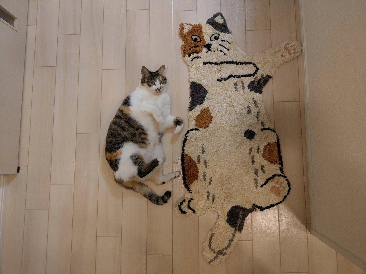 うちの猫とよく似たラグを手に入れた