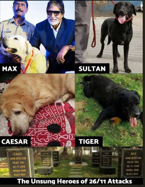 Unsung heroes of #2611Attack ❤️ The canine warriors - Max, Sultan, Caesar and Tiger. Each one of them fought bravely right throughout the carnage. They may have crossed the rainbow bridge 🌈 But, these heroes will always have a special place in our heart! #MumbaiTerrorAttack