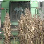 Image for the Tweet beginning: Fall harvest is here, but