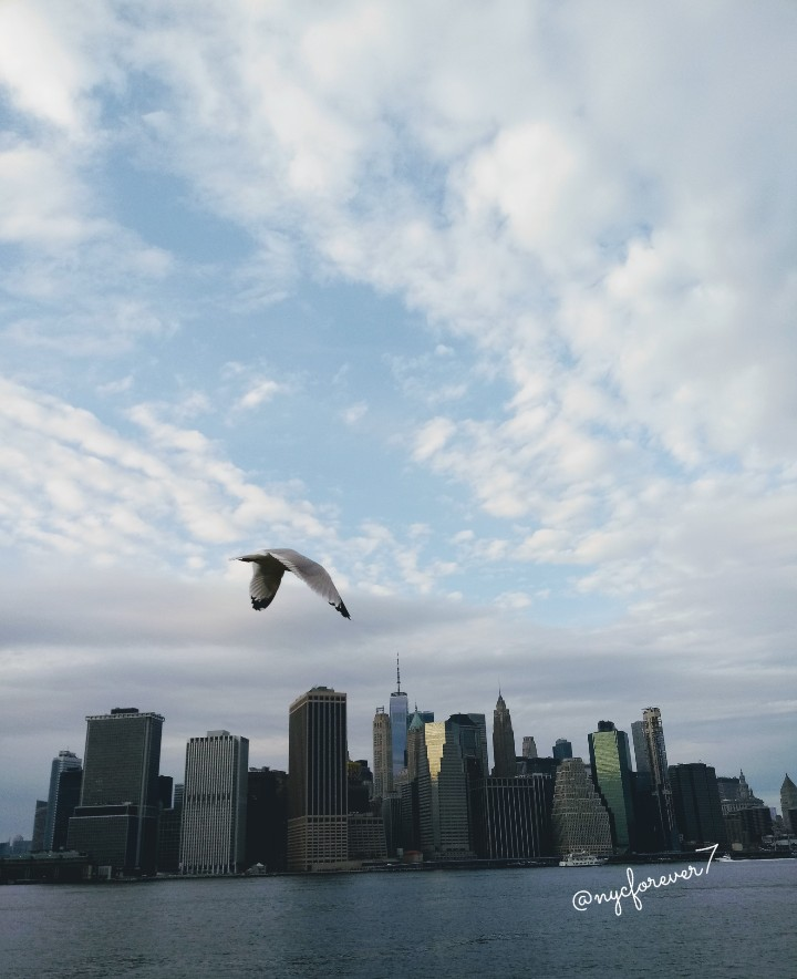 """Give thanks for unknown blessings already on their way."" - Native American Saying  Stay #great and full.  #grateful #happythanksgivng  #gratitude #abundance #blessings #nativeamerican #nyc #skyline #freedomtower #eastriver #brooklyn #Manhattan  #architecture #freedom #bird"