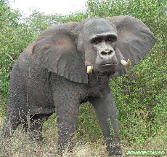 例えば君が傷付いてアフリカゾウになったゴリラ