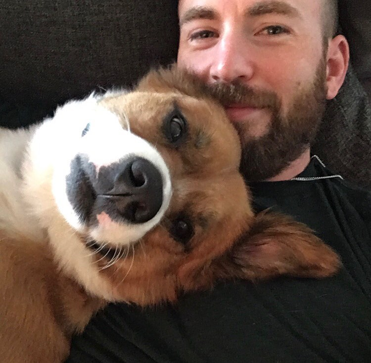 We're so very #ThankfulFor Chris Evans and all the great photos he gave us this year. Of his dog, obviously. (📷: Instagram)