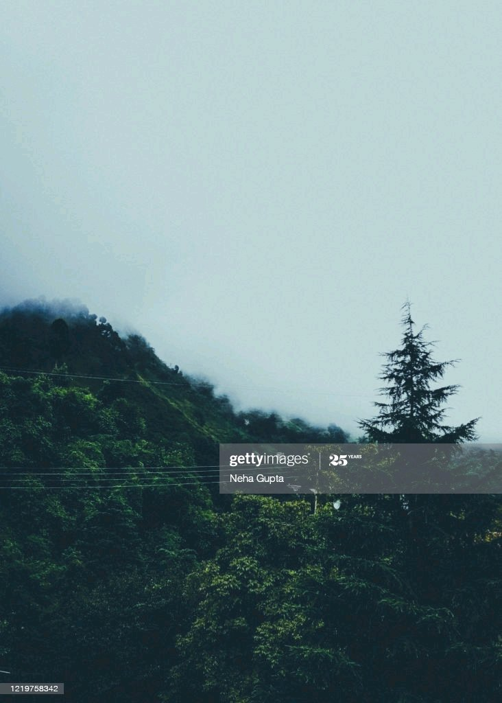 Central Himalayan subtropical pine & oak forest #Nainital #Uttrakhand #IncredibleIndia #NaturePhotography #photograghy #gettyimages https://t.co/z5av1gu0tz https://t.co/ALZgTIp01I