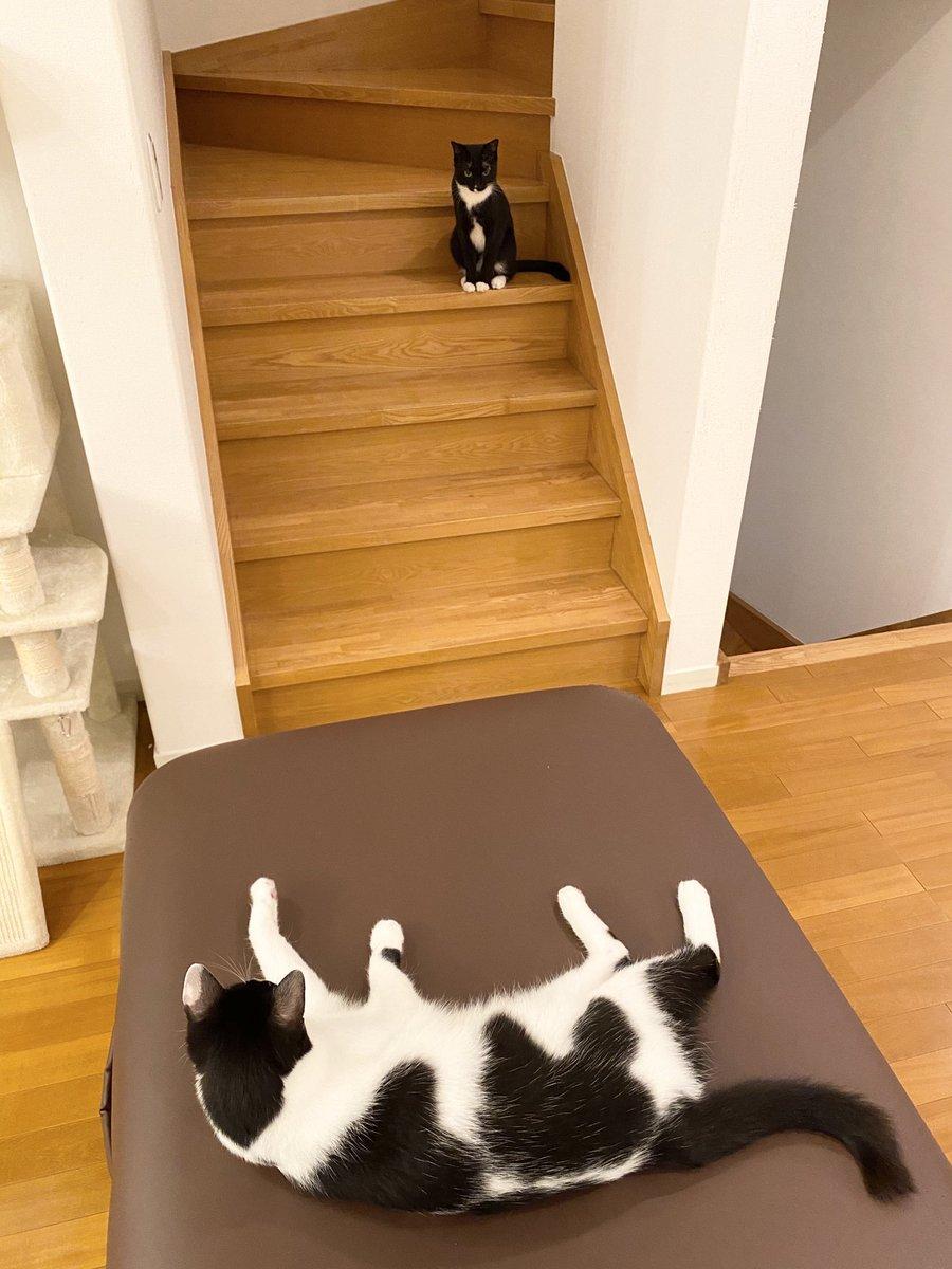 我が家では3匹(白多め、黒多め、真っ黒)が幅を利かせて暮らしています