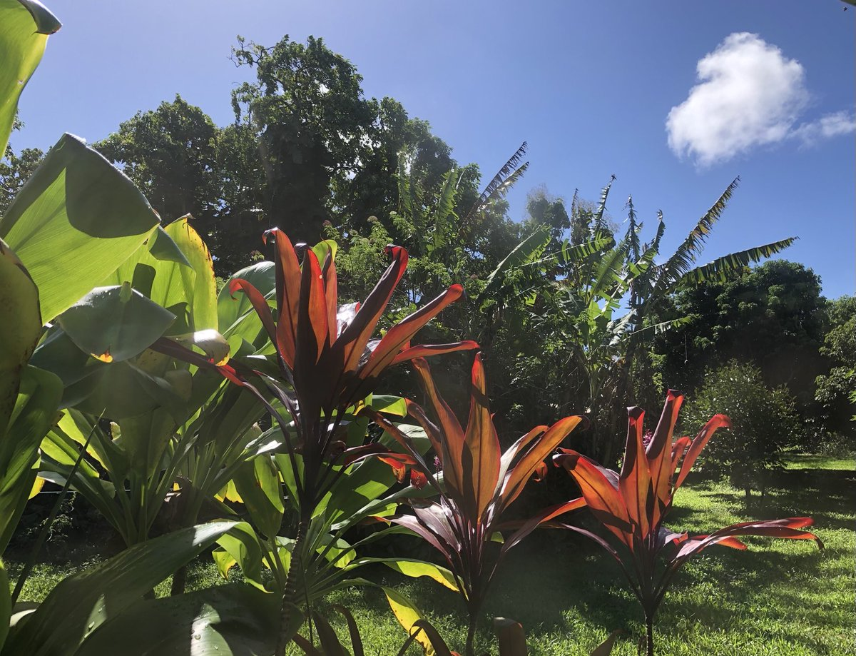 test Twitter Media - Happy Thanksgiving! It's a beautiful day in Haiku, enjoy! #CMWeather #Maui #Thanksgiving #MagicalMaui #MauiNokaoi https://t.co/X6pVlFejul
