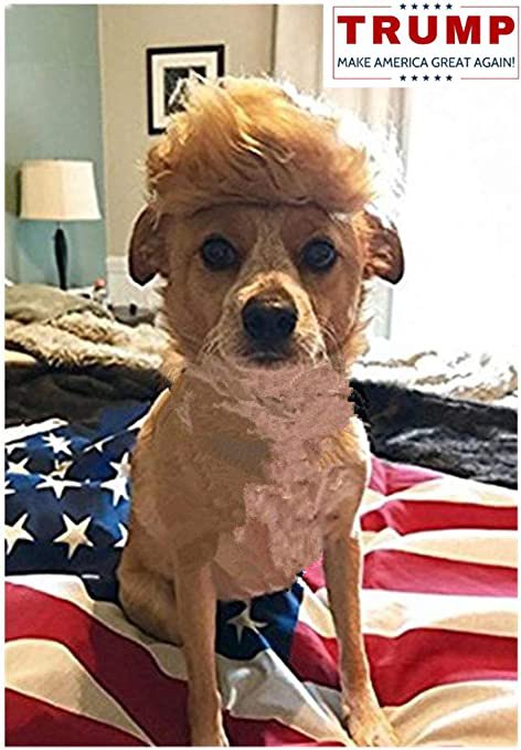 He could have won if we shaved his ass and taught him to walk backwards  #TrumpIsALaughingStock #NationalDogShow