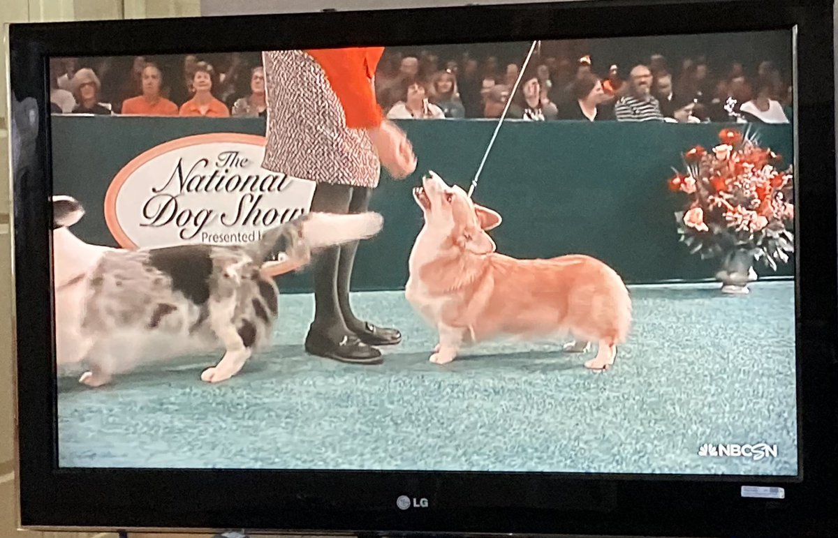These dogs all have normal human names like Drew and Sophia not an Ayden or Maysleigh or Ayslyyn in sight #NationalDogShow