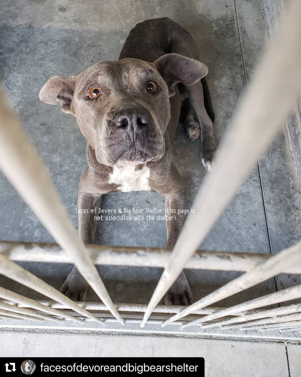 Here's a #NationalDogShow everyone should see. A sweet soul who was bred for profit then thrown away like garbage. The shelters are full of them. Do not support breeders. Go adopt a dog. Their lives are depending on it.    is a good place to start. #ADOPT