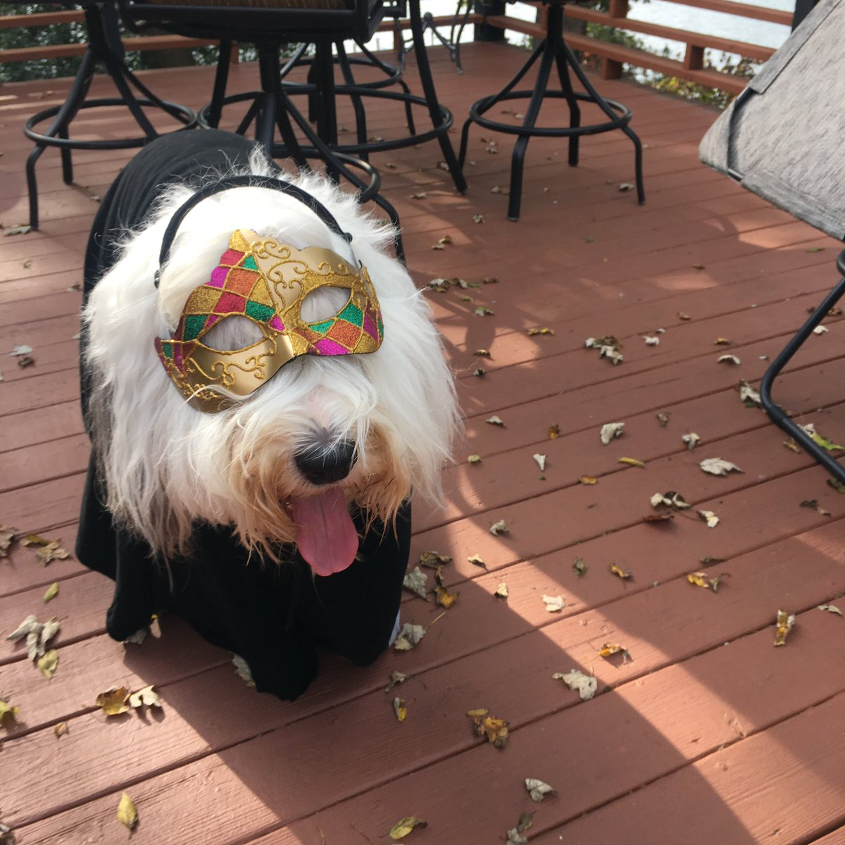 #NationalDogShow best in show is always going to be the Old English Sheepdog especially my Mackey!!