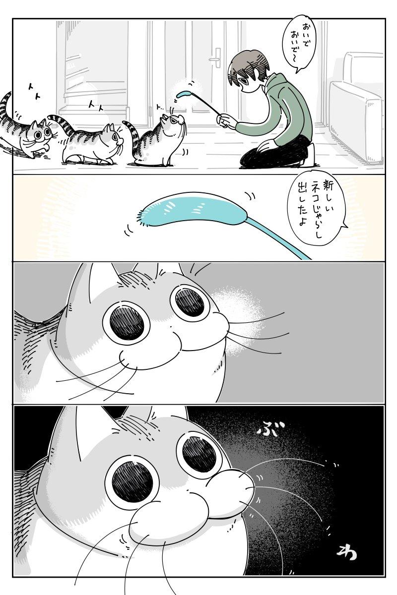 新しいネコじゃらし