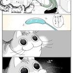 新品の猫じゃらしだとテンションも上がる?!可愛すぎて癒される猫漫画!