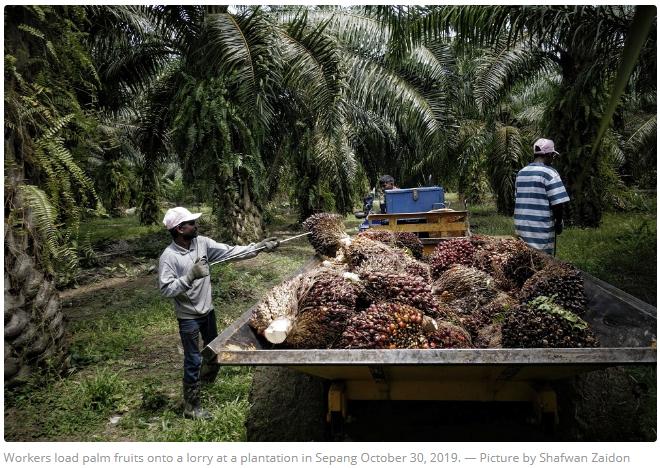 @mpocHQ: #BusinessNews: Ministry @UstDrTakiri - #Palmoil export value will suffer if #Malaysia stops exporting to #EU