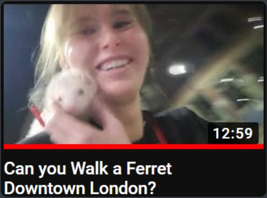 kaitlyn - I posted a new video yesterday, its of me walking my ferret downtown (and getting stopped every two minutes)   and I'm also giving away a ferret sticker to a random youtube comment 👉👈 gogo