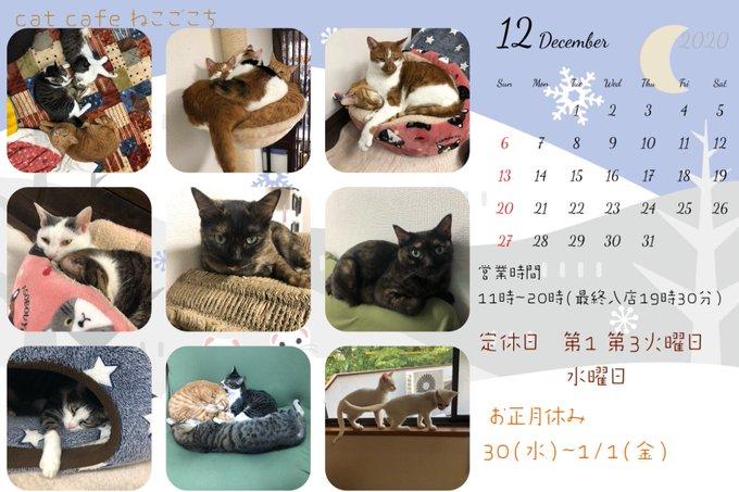 ねこごこち12月営業カレンダー