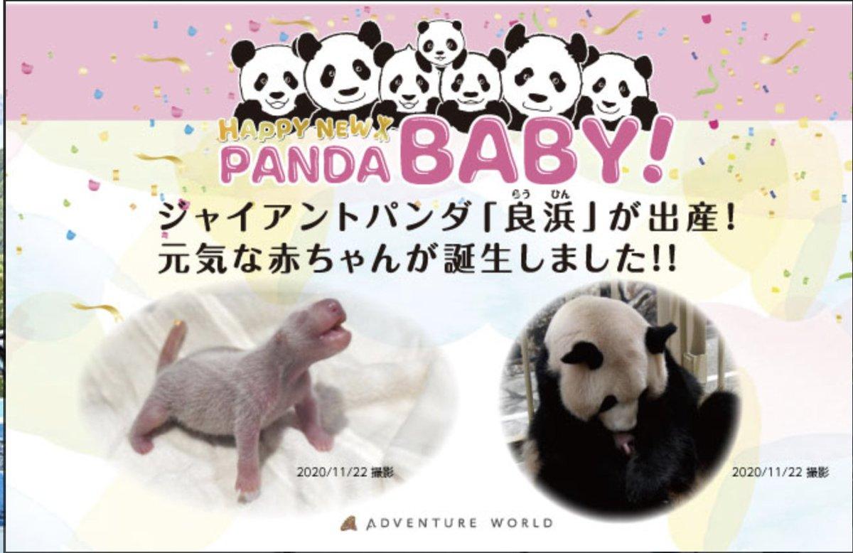 白浜アドベンチャーワールドでパンダが産まれた😍 嬉しい嬉しい嬉しい 🐼パンダ🐼好きなアタクシ 早速白浜のマリオットを予約してみた😉 おそらく春ぐらいにお披露目か!!仕事さっさと片付けていくぞー♪ #パンダ #大熊猫 #白浜 https://t.co/4c9uVNVzP4
