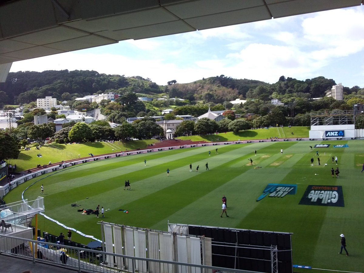Test match morning at the Basin Reserve. Some of the pohutukawas are out. Howling gale, obviously.