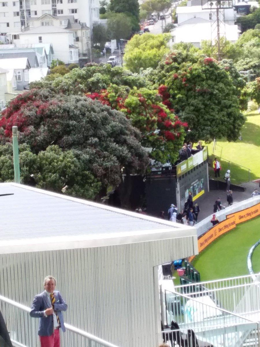 Pohutukawas, the New Zealand christmss tree.