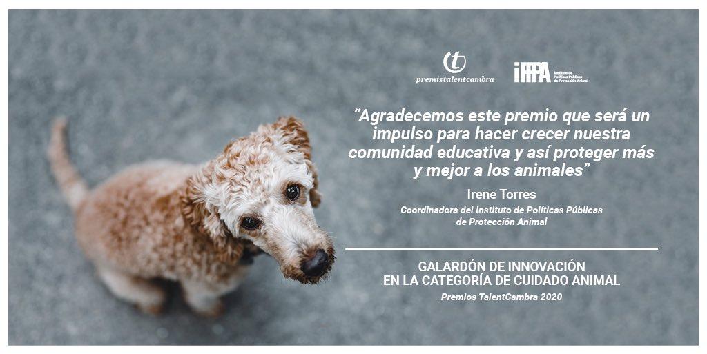 En los recién celebrados @premistalent se ha premiado por primera vez una entidad dedicada a la Cura Animal: felicidades por el más que merecido reconocimiento al Instituto de Políticas Públicas de Protección Animal #IPPPA #PremisTalentCambra  👉https://t.co/7etXYflIxN @ffw_es https://t.co/nmV2TaxMc2