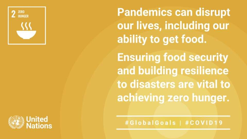 As more go hungry and malnutrition is on the rise, achieving #ZeroHunger by 2030 is in doubt & #COVID19 is making it worse. #GlobalGoals offer the best option to recover better. Learn why Goal 2 matters now more than ever: