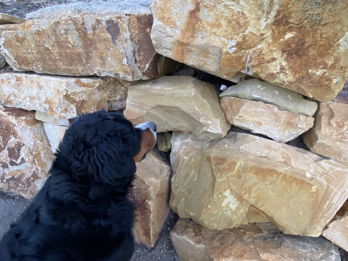 Teddy has made friends with an Ermine that lives in these rocks.  They say hi every morning.