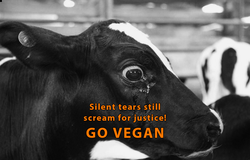 Suffering is a universal language spoken with tears👁👁💦  Humanity is broken but we can fix it. Every time we speak for the voiceless we become part of the cure🐮  #BeKind Be #vegan💖  @RickyGervais @Ivy_MiddletonUK @Protect_Wldlife @PeterEgan6 @zbleumoon @Animals1st @ARCrusade