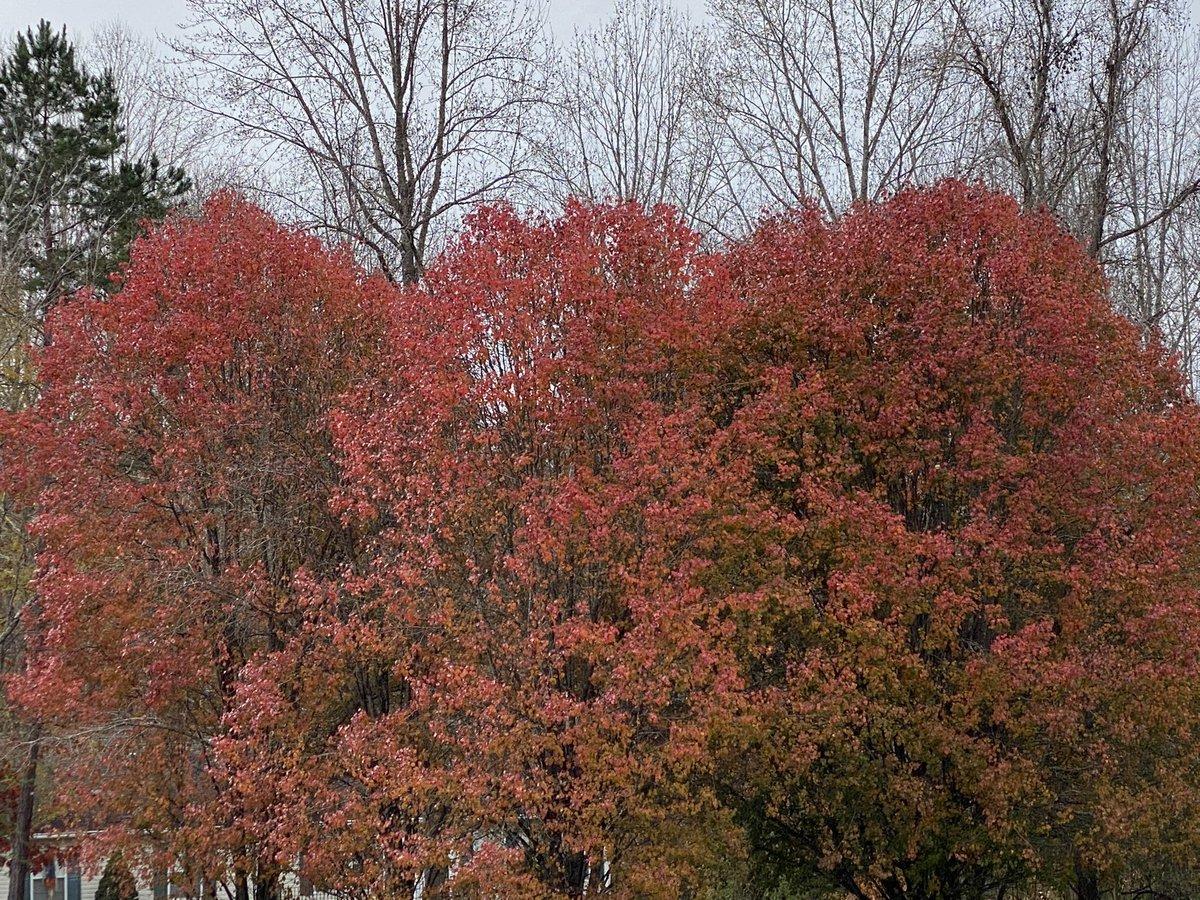 Fall's last hurrah #MyCurrentView #NC