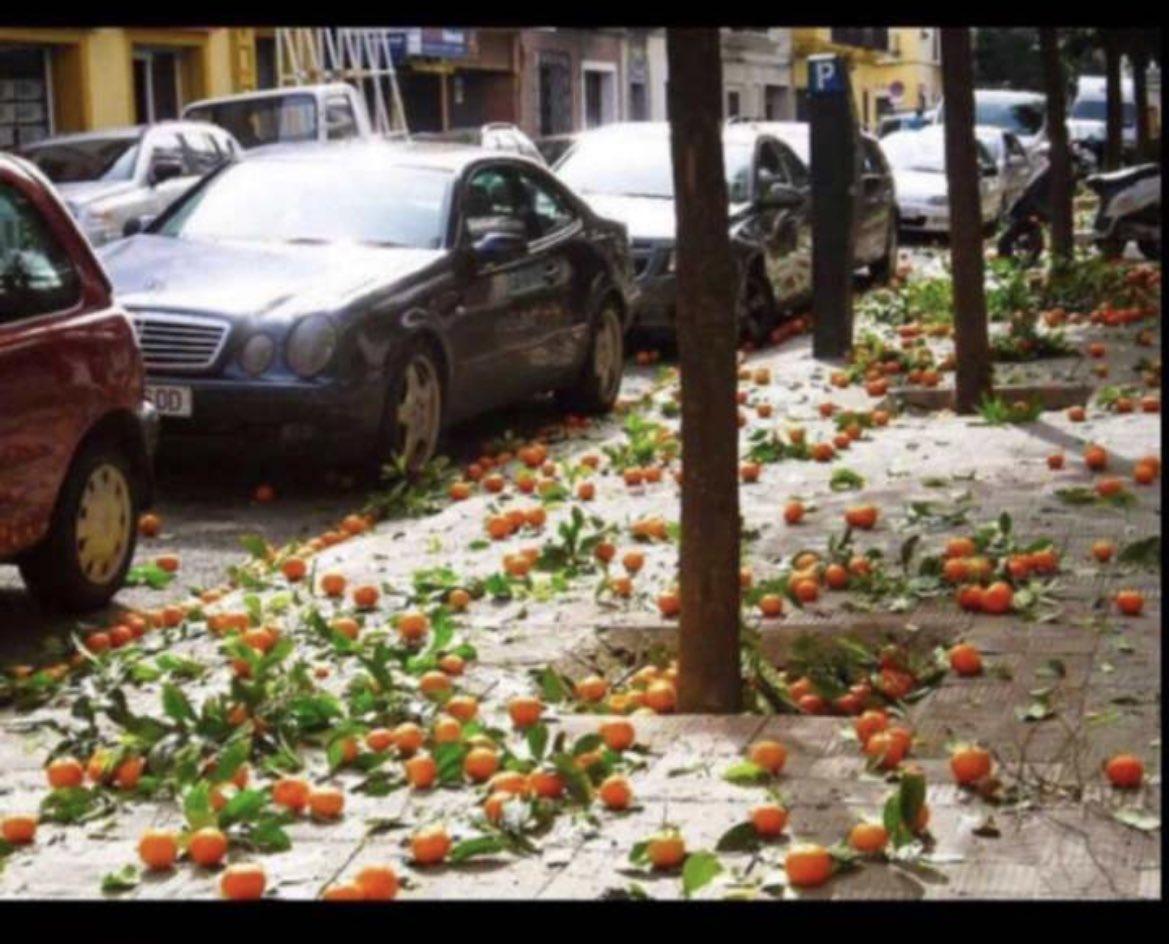 تساقط البرتقال في اشبيليه - اسبانيا اخبرنا ماذا يتساقط في شوارع بلدك ؟  Orange falls in Seville - Spain Tell us what is falling in the streets of your country?   #YourLightWithTXT   #اكثر_تطبيق_ياخذ_وقتك