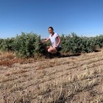 In 2012, Dean and Tanya Butler partnered with Wheatbelt NRM to investigate the use of Saltbush as a method of treating salt impacted areas on their farm at Belka Valley. #NLP https://t.co/gYa7Pv4V3A