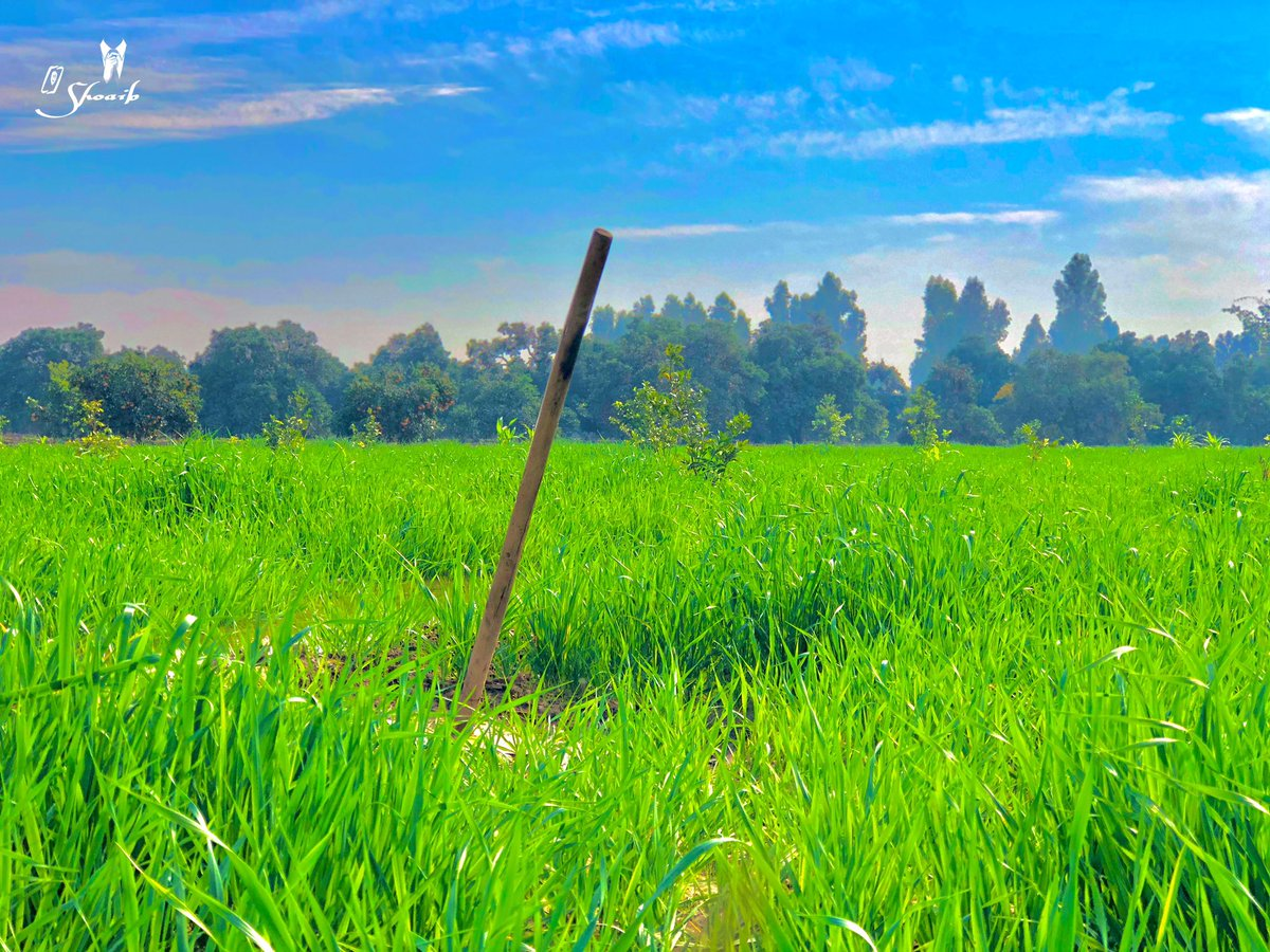 #barmusa #shoaib_riaz #photooftheday #instagood #nofilter #tbt #igers #picoftheday #swag #lifeisgood #caseofthemondays #instapic #instadaily #mandibahadduin  #instamood #followme #likeforlike #like4like #follow4follow #followforfollow #f4f #field #green #farmar #villagelife