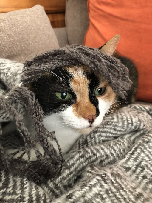 Moss was hoping that she could hide from Monday but it found her...  #MondayMotivation #mondaythoughts #MondayMorning #MondayMood #mood #cats #CatsOfTwitter #cute