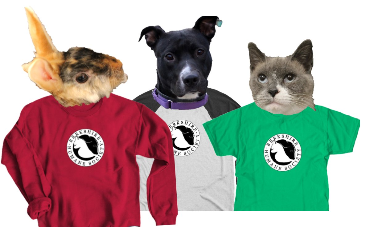 """It's #CyberMonday! Support homeless animals with your online shopping. Buy a #BerkshireHumane Society sweatshirt or t-shirt at  Our """"models"""" Bunbun, Boo and Trillium are available for adoption by appointment."""
