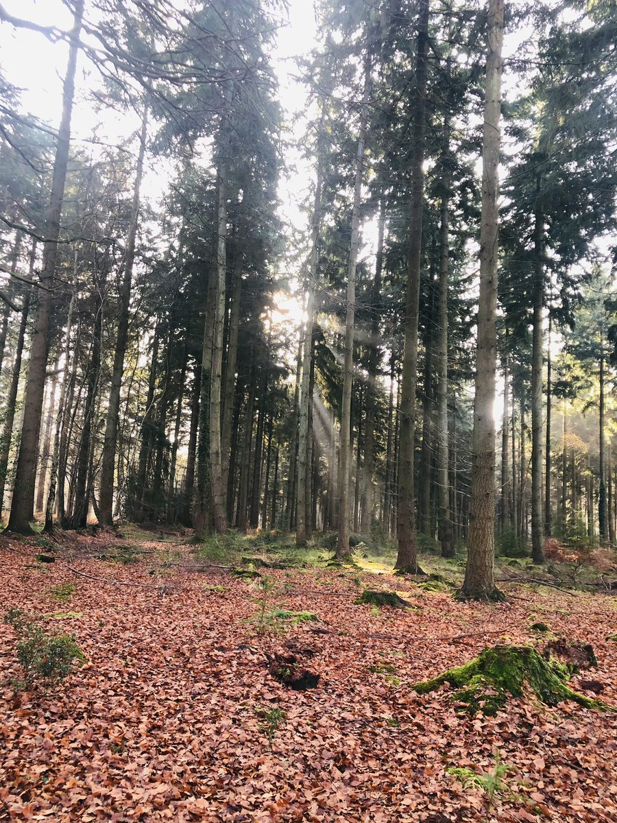Lovely Sunday walk, love having the New Forest on my doorstep. #beautiful #sundayvibes #familytime #newforest #ashurst