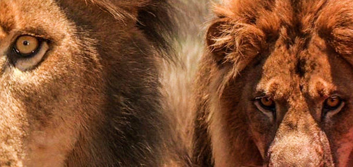喰い ツァボ ライオン 人 の
