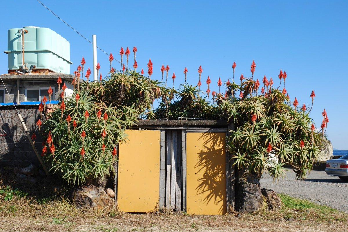 12/19、路上園芸で俳句を詠んでみよう!というオンラインイベントを開催します。路上園芸写真をお題に思い思いの句を詠みます。司会はむらたぬき @tetsuro5 。実は吟行と路上観察って近しいものがあるのでは、という話から始まった企画。今年のシメにぜひいかがでしょうか。