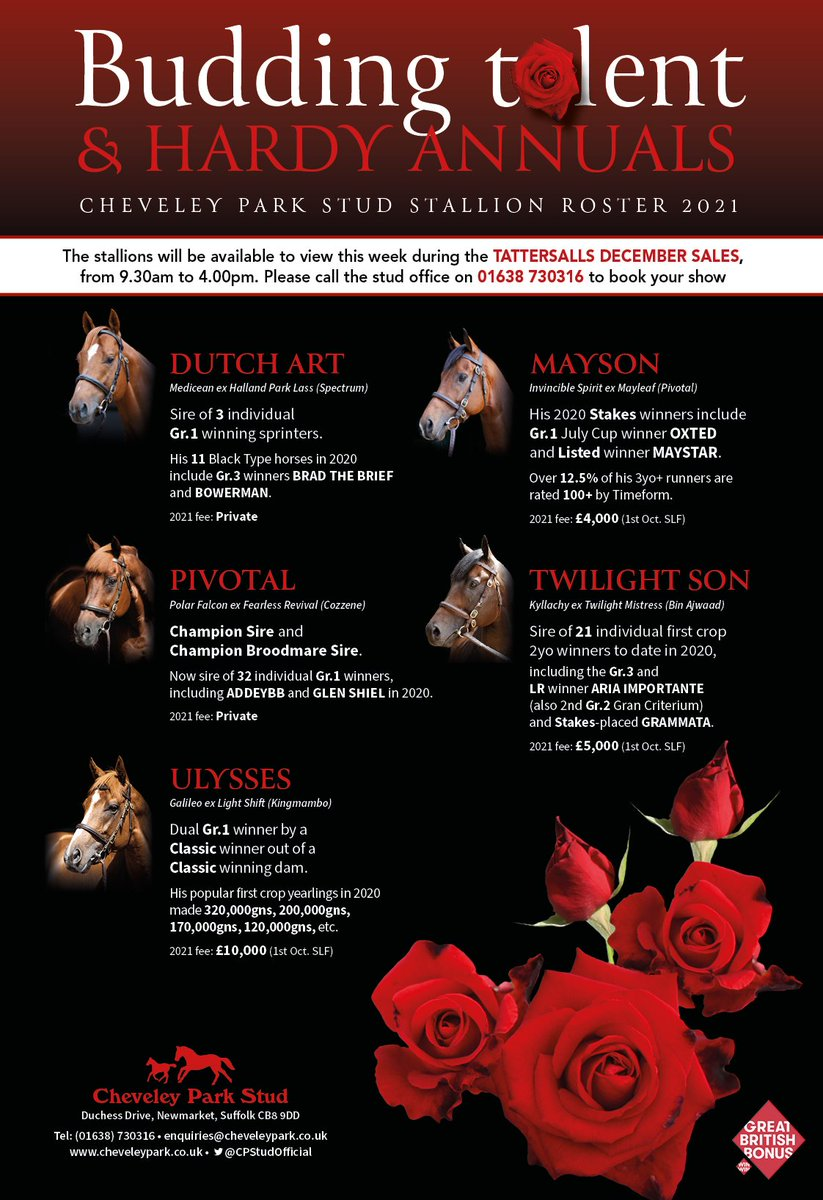 The @CPStudOfficial stallions are available to view during the @Tattersalls1766 December Mare Sale 👀  Please 📞 01638 730316 to book an appointment.