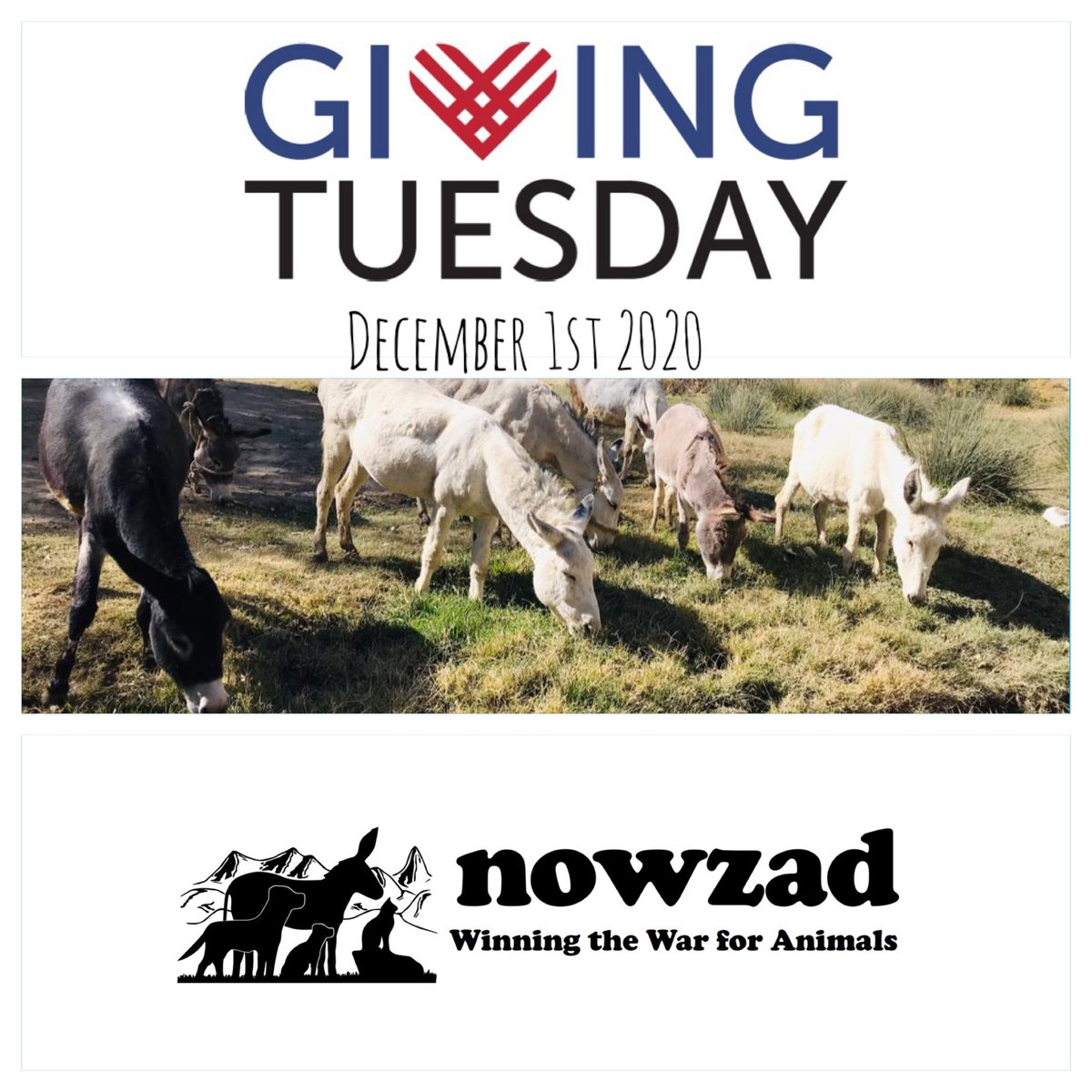 Tomorrow is #GivingTuesday and our new appeal goes LIVE at 8am ET 💫  GivingTuesday is a global day of giving ~ so WATCH THIS SPACE to find out how YOU can maximise your donation and get it matched to help the animals of Afghanistan even more! 👀  Thank you 🙏🏼