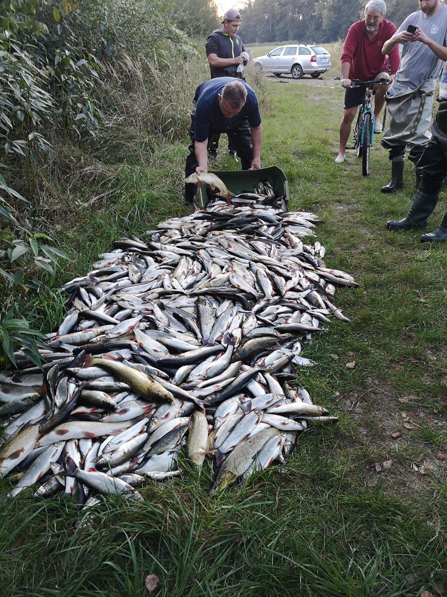 Otrávená Bečva - časová osa otravy sestavená rybáři. Vystudoval jsem chemii vody, a musím říct, že zjistit původ otravy ještě v neděli odpoledne by bylo zřejmě dost jednoduché. A rybáři jsou borci👍👍👍!… https://t.co/cWl8QocER8...](https://t.co/1RyfGIK9Pv https://t.co/Sfm7sBOG7I