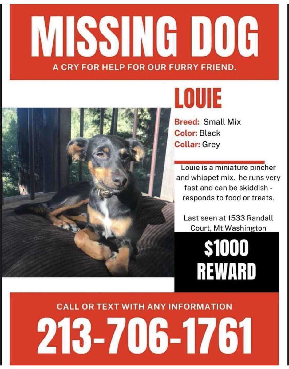 People of LA, a friend's dog is missing and they are trying to find him. Please keep a look out and call if you think you've seen him / find him! #MissingDog #dog #LosAngeles #LA https://t.co/PspKv0Lutp